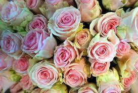 صور لـ ورود زهر زهور النباتية إزهار رومانسي