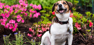 springtime garden safe for your pets