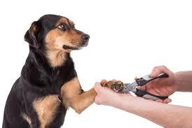 dog biting nails top 6 reasons why