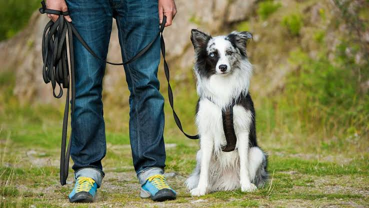 Image result for Dog Training""