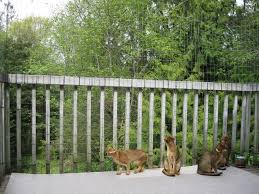 Cat Proof Balcony Cat Proof Balcony Cat Proofing Cat Fence