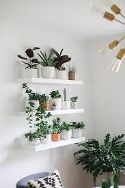 how to build the perfect plant wall