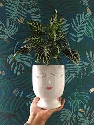 jungalow zebra plant aja teal wallpaper