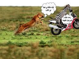 صور حيوانات عليها تعليقات مضحكة صور مضحكة نكت فيس بوك واتس اب