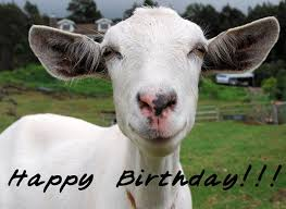 happy birthday images for a goat goat of the month heidi