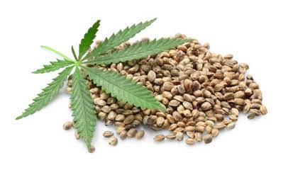 Image result for Legal Points To Know About Cannabis Seeds""
