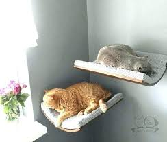 cat wall shelves google search cat