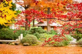 companion plants for your japanese maples