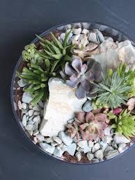 tabletop succulent terrarium diy