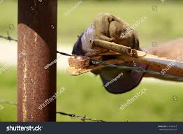 Fencing Man Working On Old Barb Stock Photo Edit Now 612403343