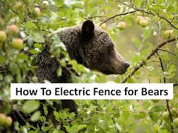 Electric Fencing Bearsmart Com