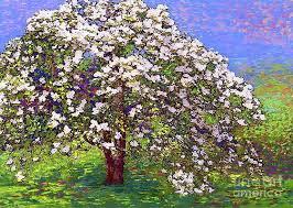 Flowering Dogwood Art Fine Art America