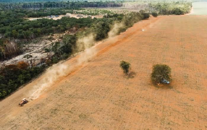 """Resultado de imagem para terra indígena desmatada"""""""
