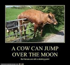 Animal Comedy Fences Animal Comedy Animal Comedy Funny Animals Animal Gifs Cheezburger
