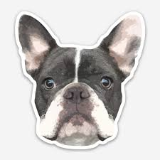 Brand New 5 French Bulldog Frenchie Dog Car Sticker Decal Choice Of Colours Archives Statelegals Staradvertiser Com