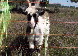 Goats Fencefast Ltd