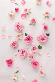 صور خلفيات واتس اب ضع للواتس خلفيه جميله صباح الورد