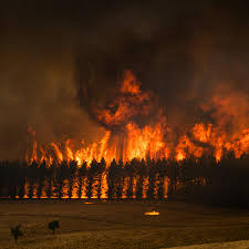 The Australia Wildfires in Pictures ...