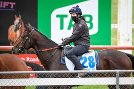 Strong field to contest Geelong Cup in ...