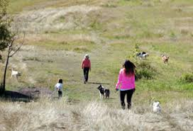 Off Leash Area Locations In Parks