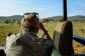 elephant relocation — Blog — ERP