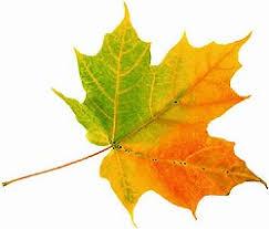 Podzimní prázdniny - DŮLEŽITÉ :: ANA