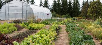 guelph centre for urban organic farming