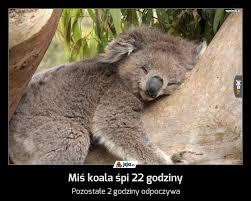 Znalezione obrazy dla zapytania: miś koala