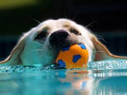 Summer time fun on the water. Keep your dogs safe. | Petfinder