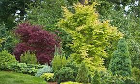 dwarf conifers offer big solutions