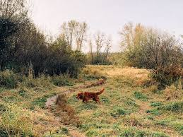 Top 10 Seattle Dog Parks Beaches Grass And Mud Free Astroturf