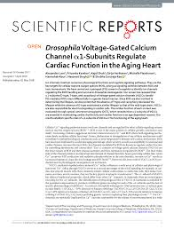 PDF) Drosophila Voltage-Gated Calcium Channel α1-Subunits Regulate Cardiac  Function in the Aging Heart