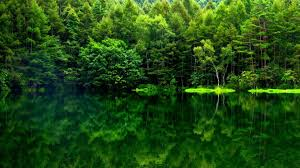 green forest wallpaper 71 images