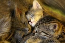 wallpaper cats kittens dora