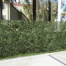 Fencescreen 5 Ft X 25 Ft L Leaf Hedge Graphic Pvc Chain Link Fence Screen In The Chain Link Fence Screens Department At Lowes Com