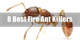 35+ Best Liquid Fire Ant Killer  PNG