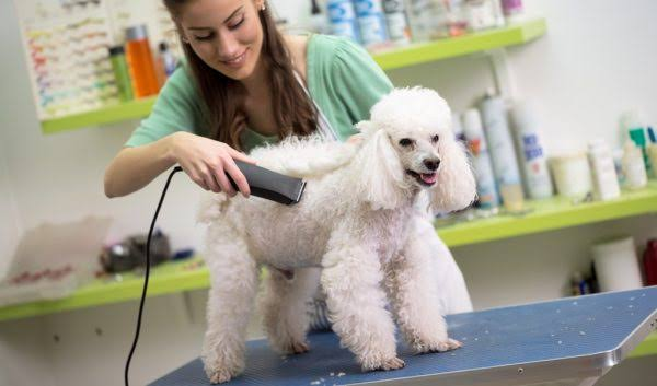 Image result for Dog Grooming""