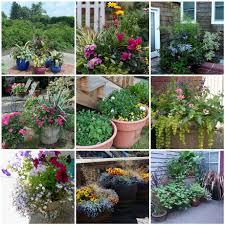 small container garden designs baser