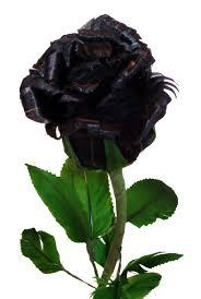 صور وردة سوداء الاسود رمز للاناقة هل للورد ايضا الحبيب للحبيب