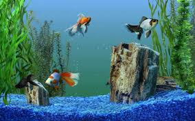 Get Aquarium Live Wallpaper For Pc Images