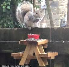 People Are Building Picnic Tables For Squirrels During Quarantine Daily Mail Online