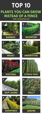 200 Backyard Privacy Plants Ideas In 2020 Privacy Plants Backyard Backyard Privacy