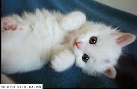 chatons mignons video dessin de chaton mignon. dessin de bb chaton ...