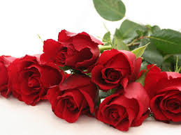 red rose flower wallpapers hd