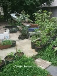 container vegetable gardens for small