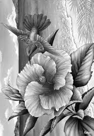 Adult Coloring Gray Scale Coloring Pages Google Search
