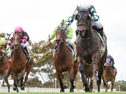 Geelong Cup 2020: Murillo salutes in ...