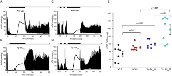 Frontiers | Expression and Activation of BKCa Channels in Mice Protects  Against Ischemia-Reperfusion Injury of Isolated Hearts by Modulating  Mitochondrial Function | Cardiovascular Medicine