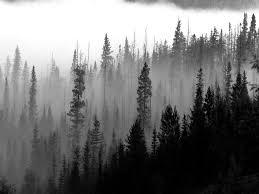 foggy-forest-final.jpg