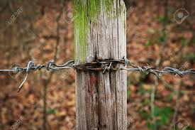 Barbed Wire Fence Post Rusted And Worn In The Woods With Mossy Stock Photo Picture And Royalty Free Image Image 50476333